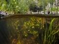 Cascade du Déroc en mi-air mi-eau, Aubrac (48) © Anne-Cécile Monnier