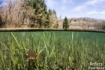 Crapaud commun - Etang forestier - Meuse © Anne-Cécile Monnier