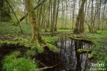 Ruisseau forestier en vallée de la Marne (52) © Anne-Cécile Monnier