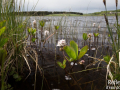 Lac Salhiens, Aubrac (48) © Anne-Cécile Monnier