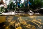 Crique Tonnegrande - Guyane