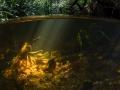 Crique en mi-air mi-eau - Guyane
