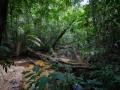 Crique Popote - Guyane