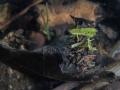 Trichoptère à fourreau © Anne-Cécile Monnier