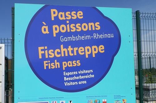 Passe à poissons de Gambsheim, Rhin